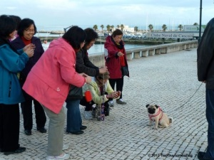 Enzo with new admirers in Cascais